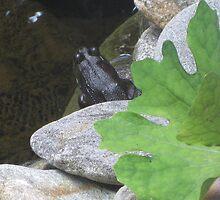 Contemplating A Swim by JRSousa