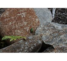 So Small inThe World Photographic Print