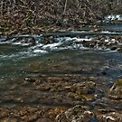 Roupes Creek by Phillip M. Burrow