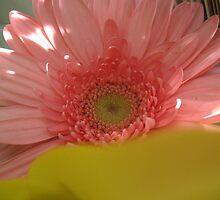 Peeking Out  Daisy by MarianBendeth