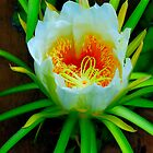 Cereus Blooming by HG. QualityPhotography