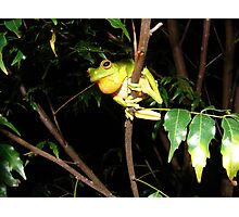 Launch Pad - Red-eyed Green Tree Frog Photographic Print