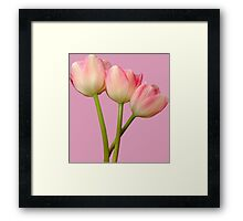 Fairy pink tulips Framed Print