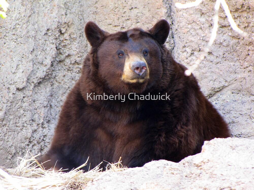 Black Bear by Kimberly Chadwick