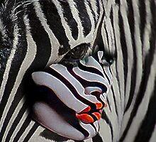 Zebra girl by Bill Brouard