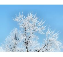 Hoar Frosted Tree Top Photographic Print