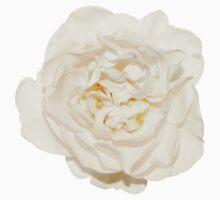 White tender rose Kids Clothes