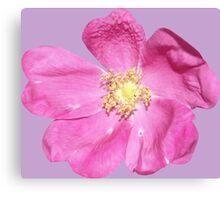 Soft purple flower Canvas Print