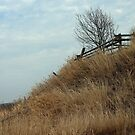 The Hill is Alive.....Fence it... by Larry Llewellyn