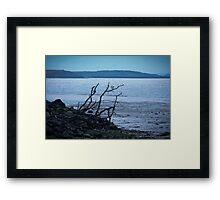 Riverside Driftwood Framed Print