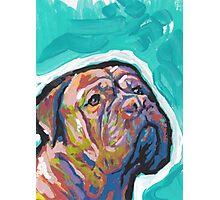 Dogue De Bordeaux Dog Bright colorful pop dog art Photographic Print
