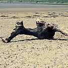 Driftwood. by Livvy Young