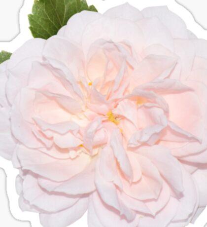 Cute pink flower Sticker
