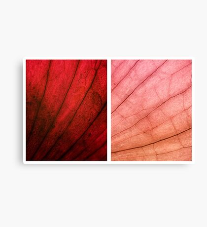 Beauty can be all over Canvas Print