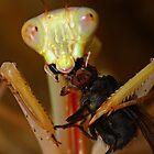 Jade mantis eating dinner by Scott Thompson