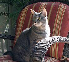 Sitting Pretty by MichelleR