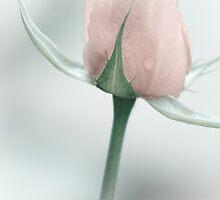 Pastel Rosebud by Kathleen  Bowman