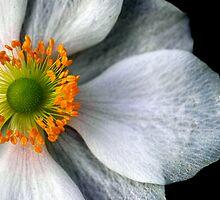 Flower II by Lucas D'Arcy