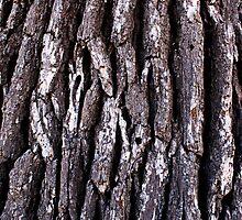 tree bark by BESphotographs