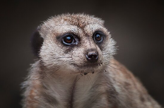 Curious.. by Tracie Louise