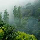 Weather Closes In, Walhalla, Gippsland by Joe Mortelliti