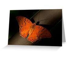 Cruiser Butterfly Greeting Card