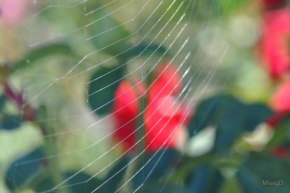 Web In A Rose Garden by MissyD