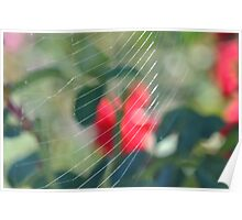 Web In A Rose Garden Poster
