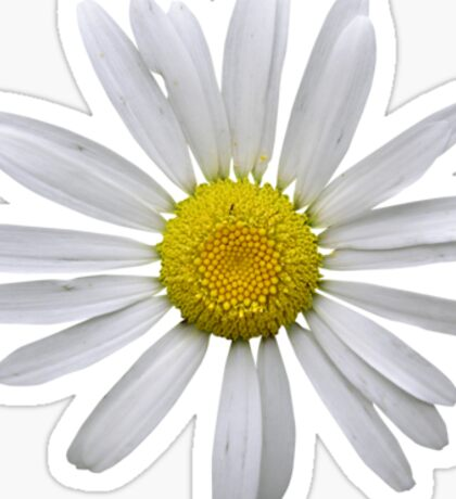 Wonderful white daisy Sticker