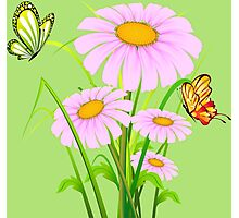 Cute daisies with butterflies Photographic Print