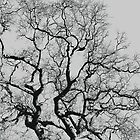 Branches Black & Grey by funkybunch