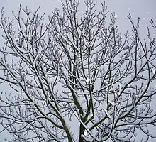 Snowflakes Fallen on the branches by MichelleRees
