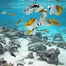 Cook Islands fish spectacular by bazcelt