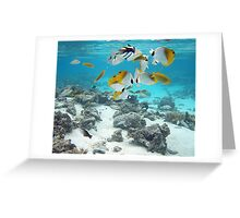 Cook Islands fish spectacular Greeting Card