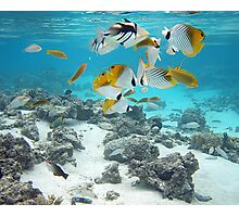 Cook Islands fish spectacular Photographic Print