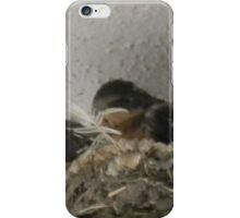 Barn Swallow Babies iPhone Case/Skin