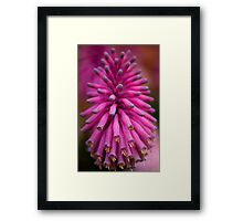 Forest Lily Framed Print