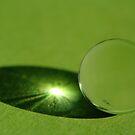Green - Light by TriciaDanby