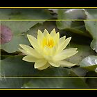 Stained Glass Yellow Water Lilly  (alterNATpics) by alternatpics