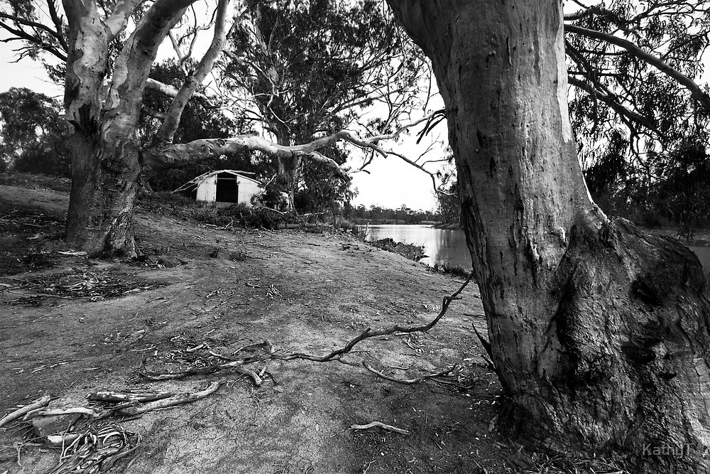 Amongst the Gums by KathyT