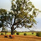 Cattle Station near Tamworth, NSW, Australia by Bev Pascoe