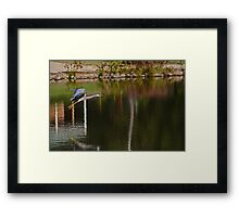 Flying Over The Pond Framed Print