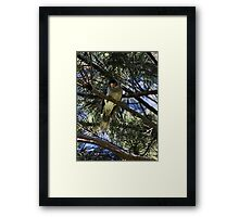 Bird On A Tree Framed Print