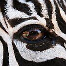 Zebra Eye by Susan Russell