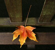 Autumn leaf by Jim Young