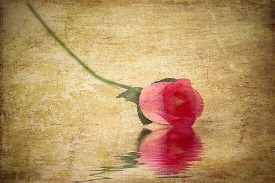 Lone Rose by Michael  Petrizzo