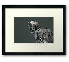 Suspicious parrot Framed Print