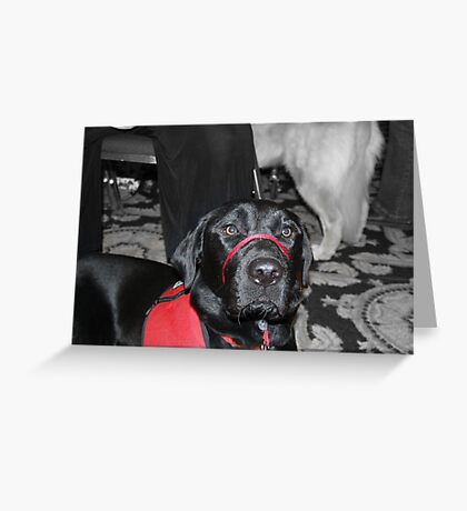 "Photos for Mom: ""I am a good dog and a great partner"" Greeting Card"