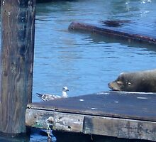 Seagull and Sea Lion by sphotographie