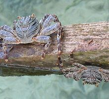 blue crabs on a sundeck by Gareth Scrivener